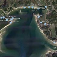 2012 Ocean Sunfish Strandings Wellfleet
